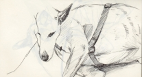 skizze hund sketch dog